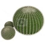Эхинокактус (Echinocactus)