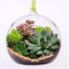 Суккуленты для флорариумов и цветочных композиций.
