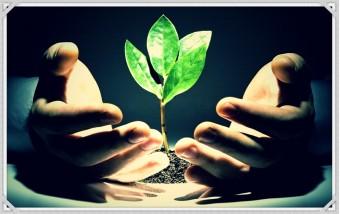 Чтобы растению выжить…