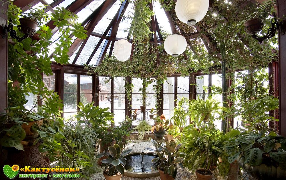 Секреты Фэн Шуй для домашних растений