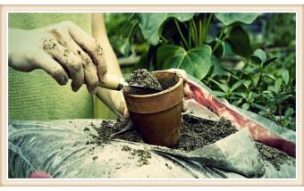 Ежеквартальная профилактика растений