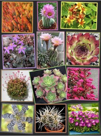 Набор «Мои первые кактусы и суккуленты»