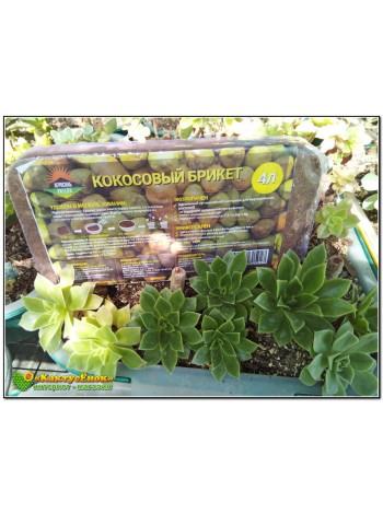 Грунт для кактусов (прессованная кокосовая стружка)