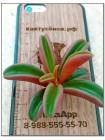 Неукорененный черенок Пеперомия Гравеоленс (Peperomia graveolens)