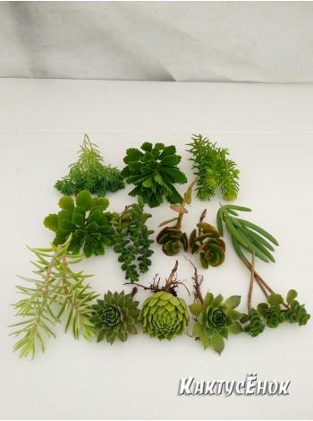 """Набор """"Альпийская горка"""" 11 морозоустойчивых растений, способных зимовать в открытом грунте."""