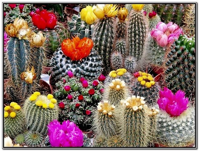Где купить кактусы для домашних коллекций?