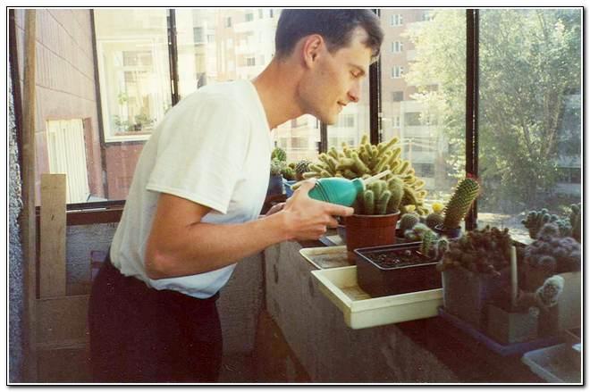 Как поливать кактусы?