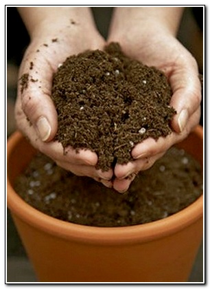 Земля для кактусов: